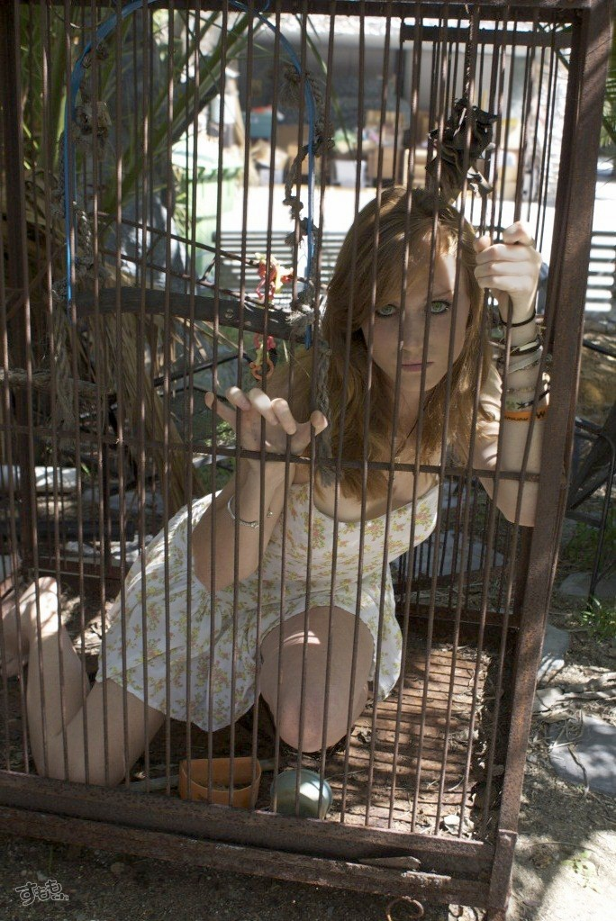 cage_5916-011